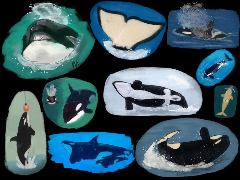 Orca Palooza by Itsgoose2u