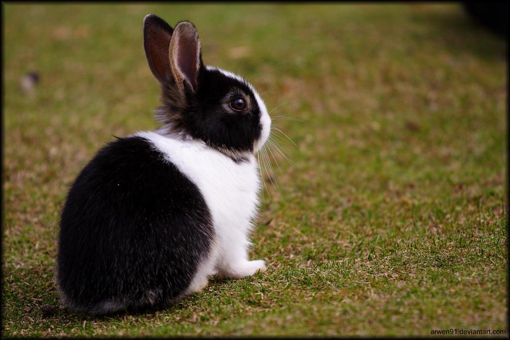 Little Bunny by Arwen91