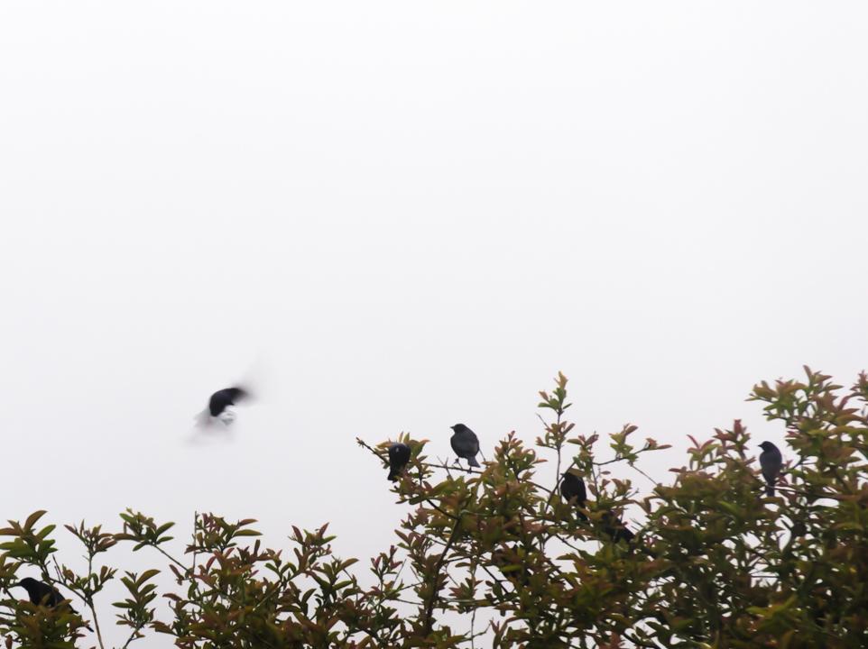 Birds-Meeting by acafoto