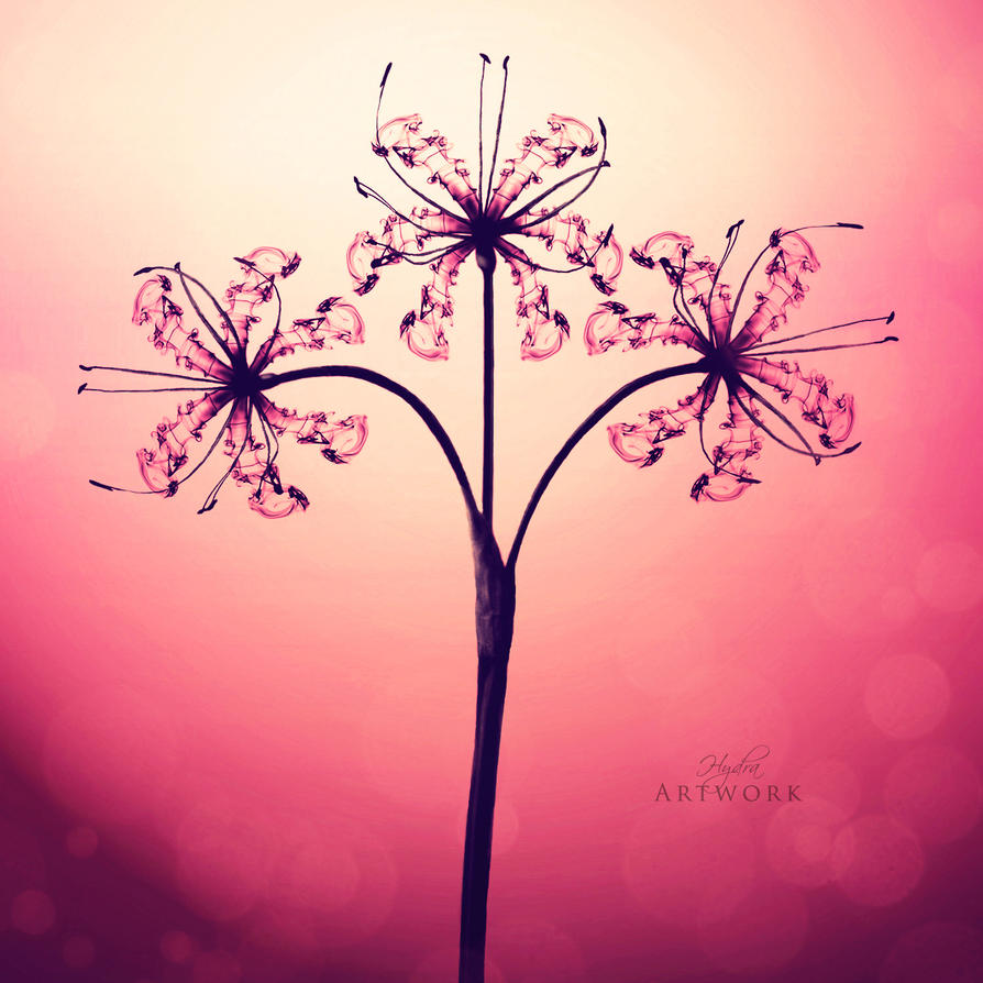 Spider Lily by HYDRA-Artwork on DeviantArt