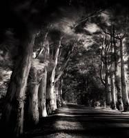 tree of life... by taykut