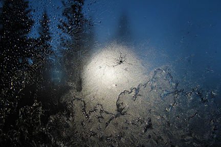 Jack Frost and Frozen Mosquito by LocationCreator