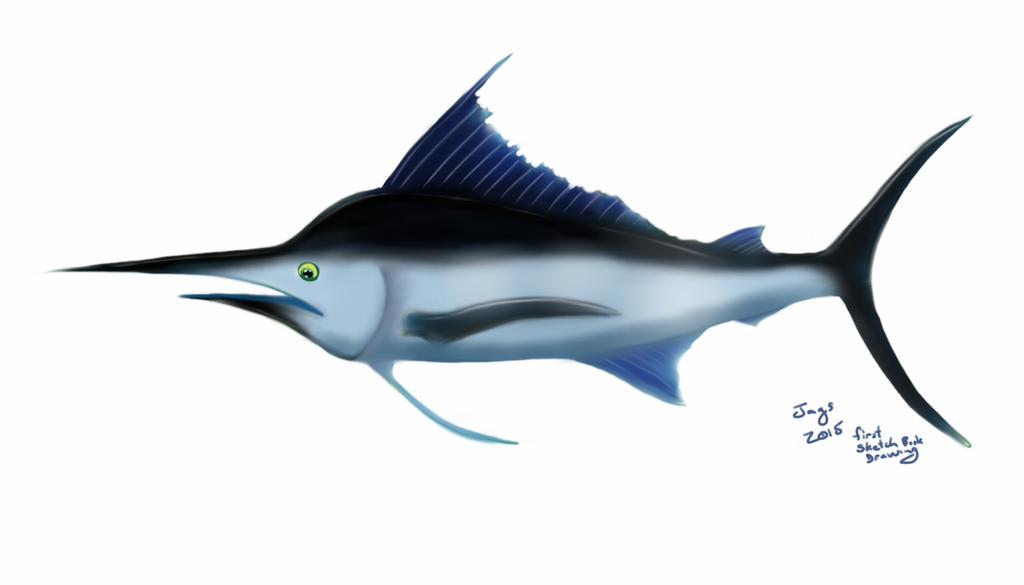 Sketch a Fish by Jags4