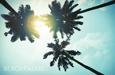 WG Beach Palms