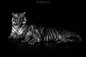 Beast Mate by FrankGo