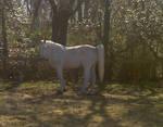 Horse Stock 13