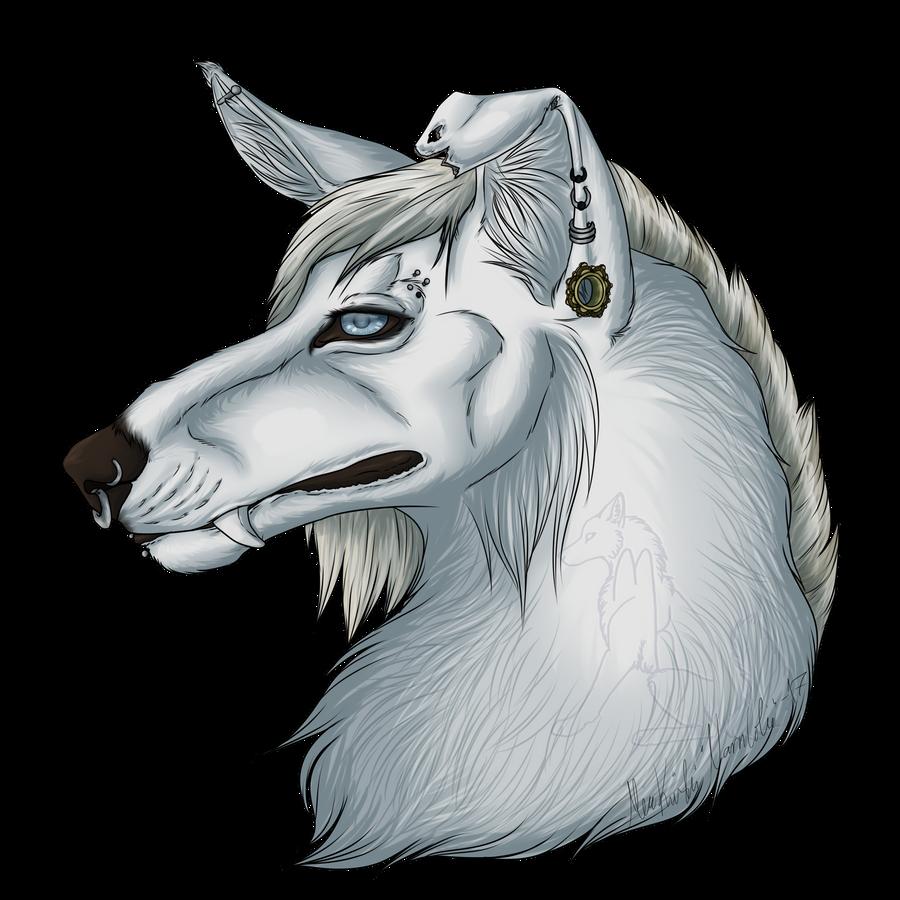 Narncolie's Profile Picture