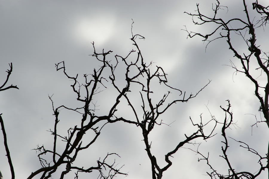 Silhouetted Branches