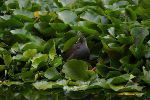 Warrnambool Botanical Gardens 9