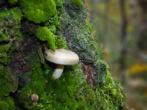 Tree, bark, moss, mushrooms