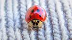 Ladybug - wallpaper 3 by artomberus