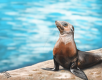 Sea lion by Spring-Fairy