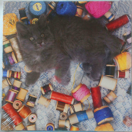 Cat Thread.02