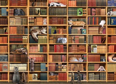 Bookcase Cat.02