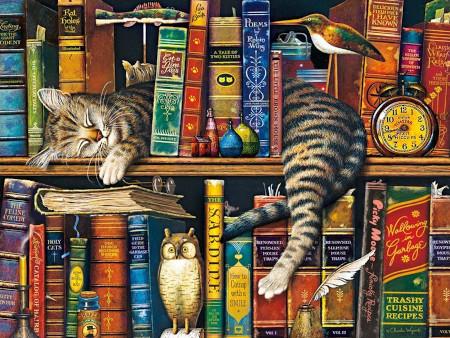 Bookcase Cat.01