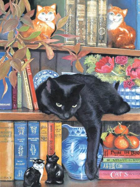 Bookcase Cat.04