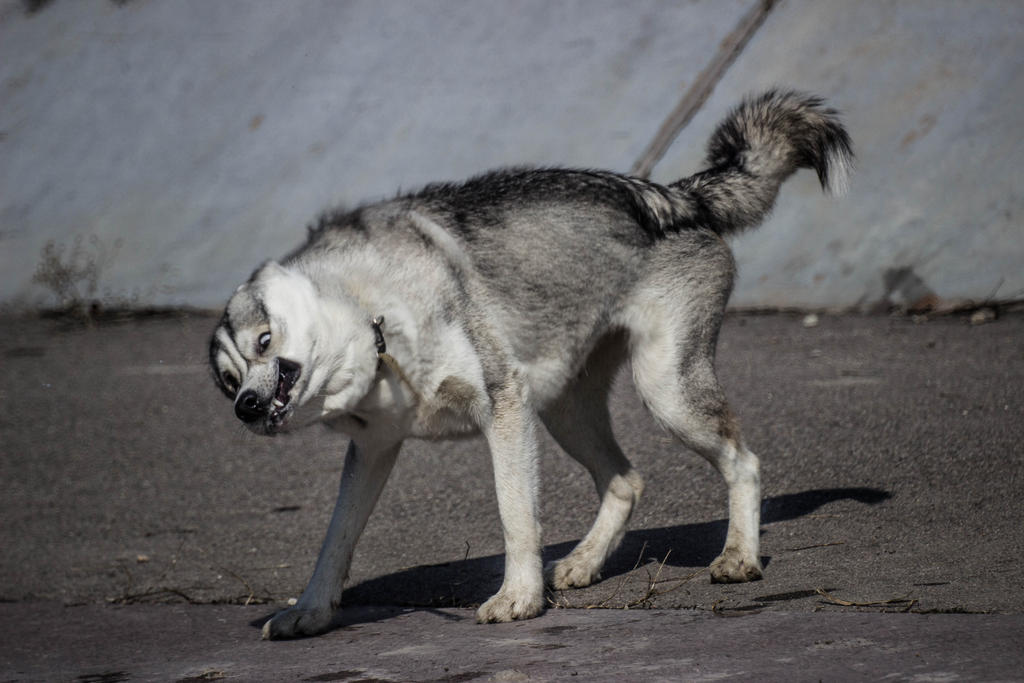 verwolf by sarikreal