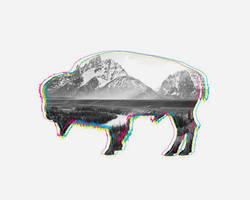 Bison by JoshCloud