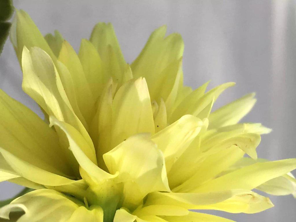 Yellow  by JewtrawM