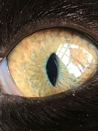 Harley's Eye by JewtrawM