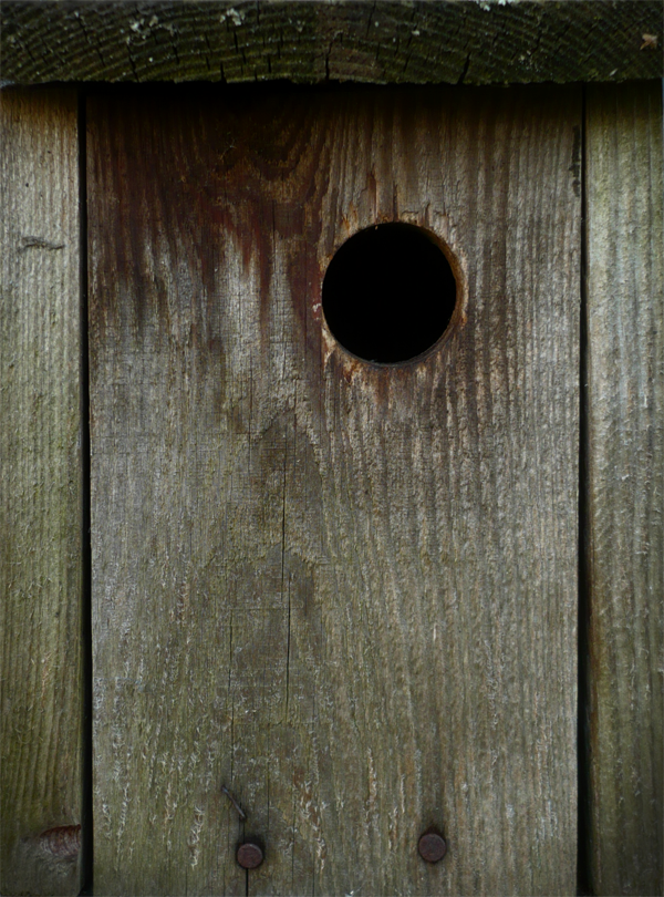 Nest box by Silvel