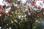 27/09/2014 Colourful Branch of Tree 5