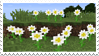 mc flowers