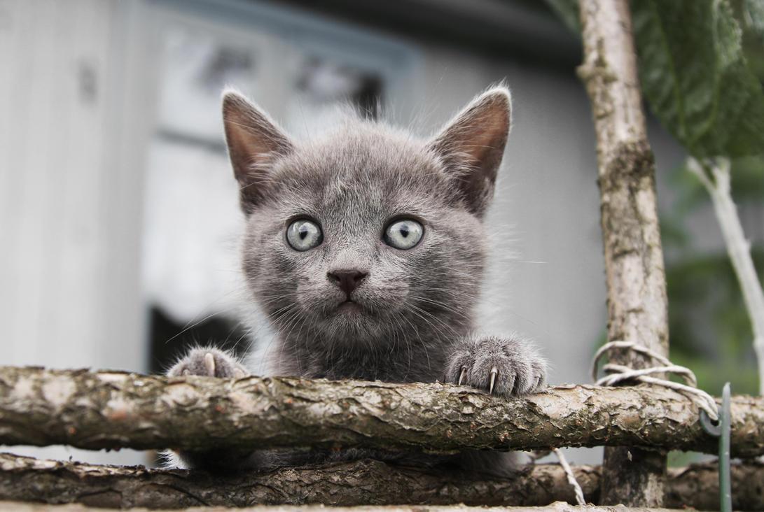 Small Grey Kitty[1] by mashaK17