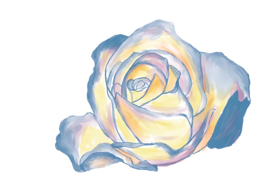 white Rose by telpri