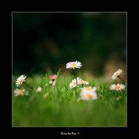 Fraicheur du printemps by fraisedesbois68