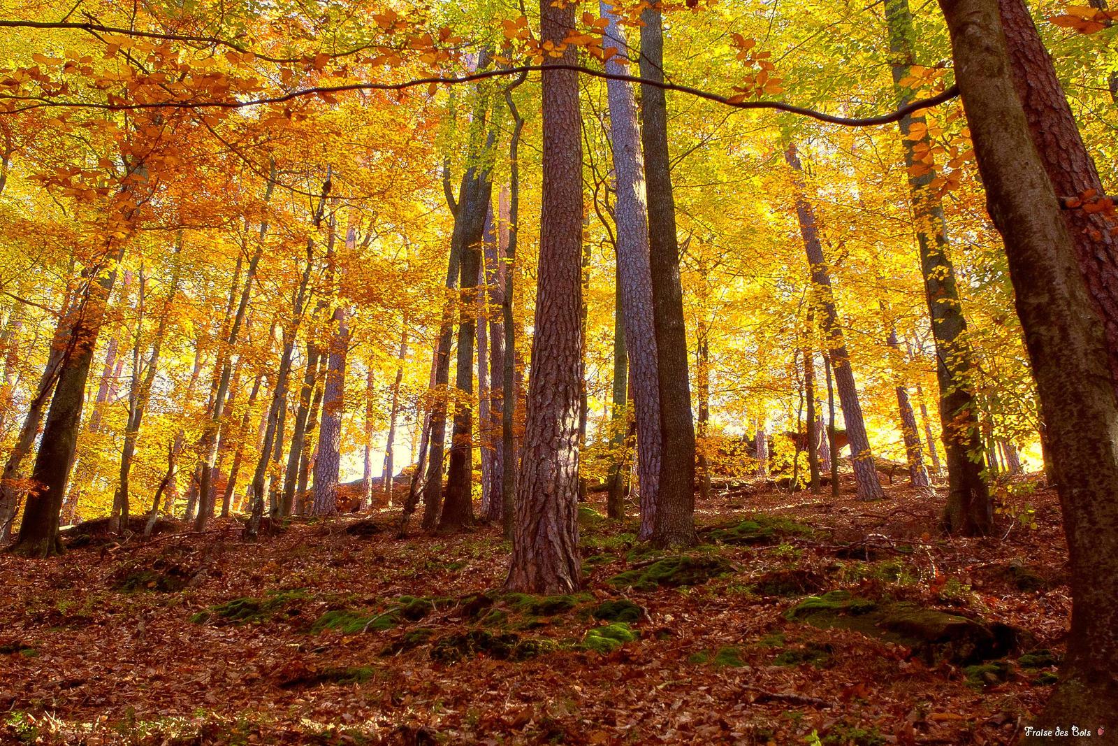Le bois du chateau by fraisedesbois68