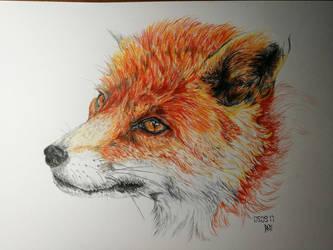 Fox by RedFenrir