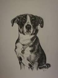 Dog by RedFenrir