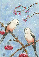 Long tailed tits by Sarosna85