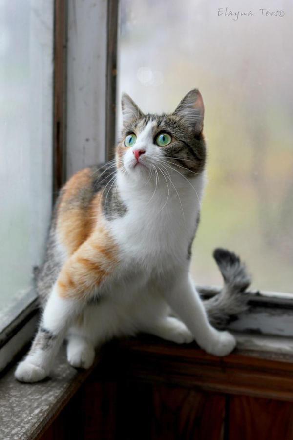 cat by ElaynaTeos