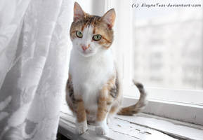 cat on the window by ElaynaTeos