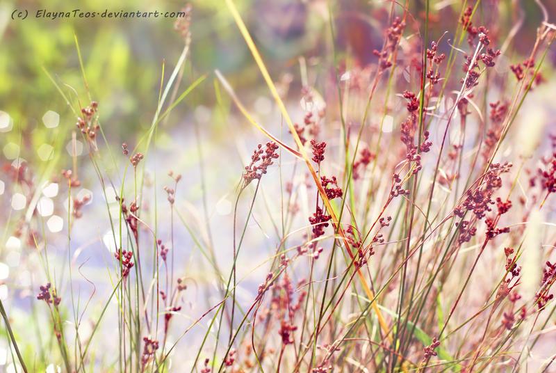 herb by ElaynaTeos