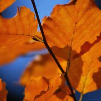 Orange Spirit by christinegeier