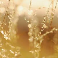 golden light by christinegeier