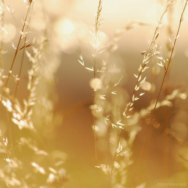golden light by FeenoGraphie