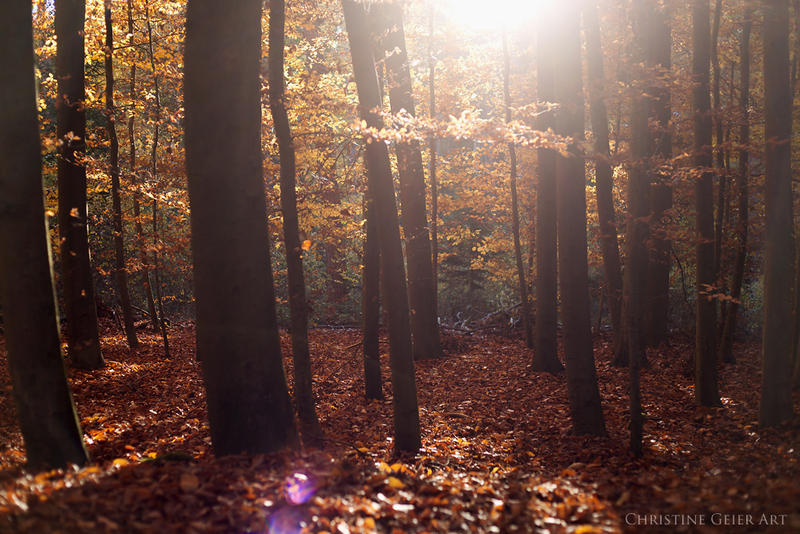 fairy forest by christinegeier