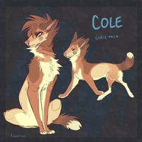 Cole | closed! by cvte
