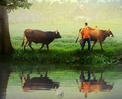 Man and the Buffaloes by Wiyarsena
