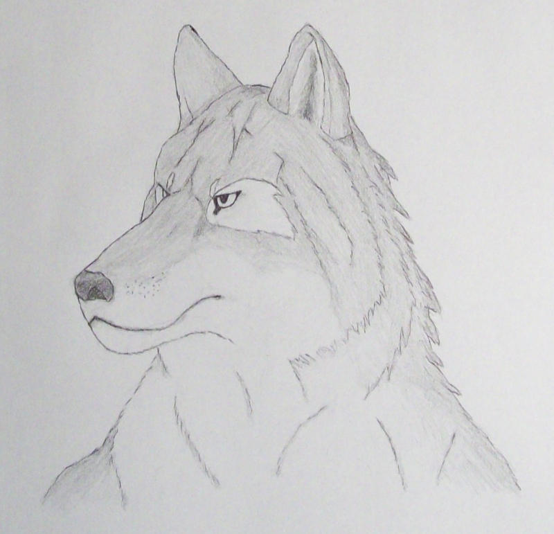 Anthro Wolf Wallpaper Anthro Wolf Face by Sollerion
