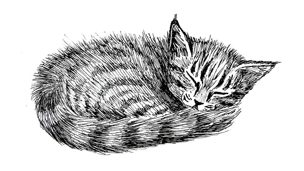 Sleeping Kitten by FirstPrimeOfCessna