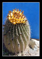 Cactus Art Print by FirstPrimeOfCessna