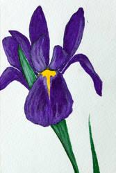 Iris Card by FirstPrimeOfCessna