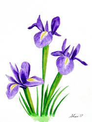 Irises by FirstPrimeOfCessna