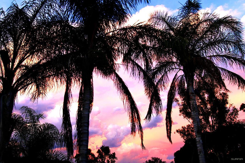Palms Australian Sky Screen Saver 3000x2000 by GrahamSurferAndrews