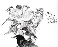 Aves del Jardin Encantado
